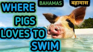 🇧🇸Top 10 Facts About Bahamas/Amazing Facts Bahamas/Bahamas Facts/Bahamas Interesting Facts