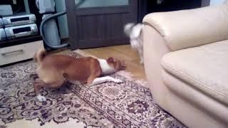 Драка собак в санкт-петербурге
