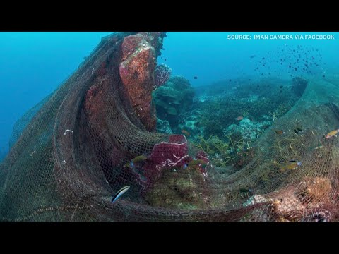 Caught on cam: Fishing net tangled in coral reefs