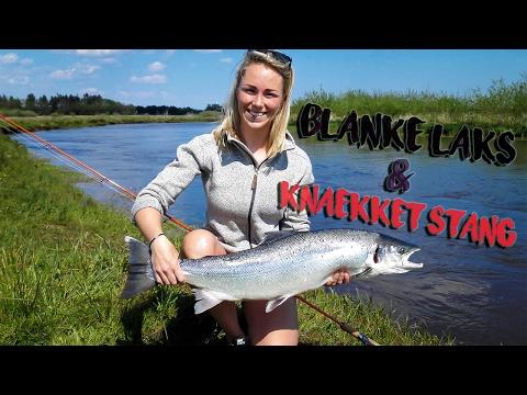 Skjern Å (2/6) - BLANKE LAKS OG KNÆKKET STANG | Salmon Fishing