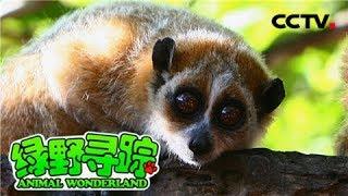 《绿野寻踪》 20180505 普洱太阳河国家森林公园的动物朋友   CCTV少儿