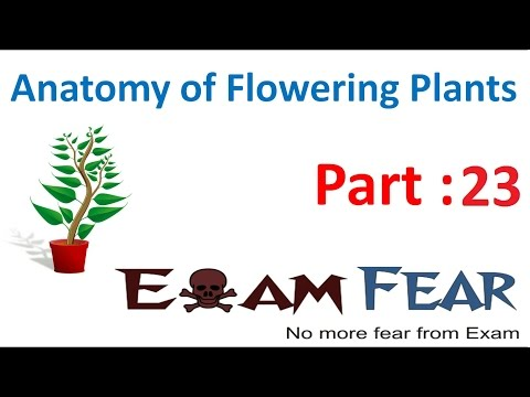 Biology Anatomy of Flowering Plants part 23 (cork cambium: secondary growth roots) CBSE class 11