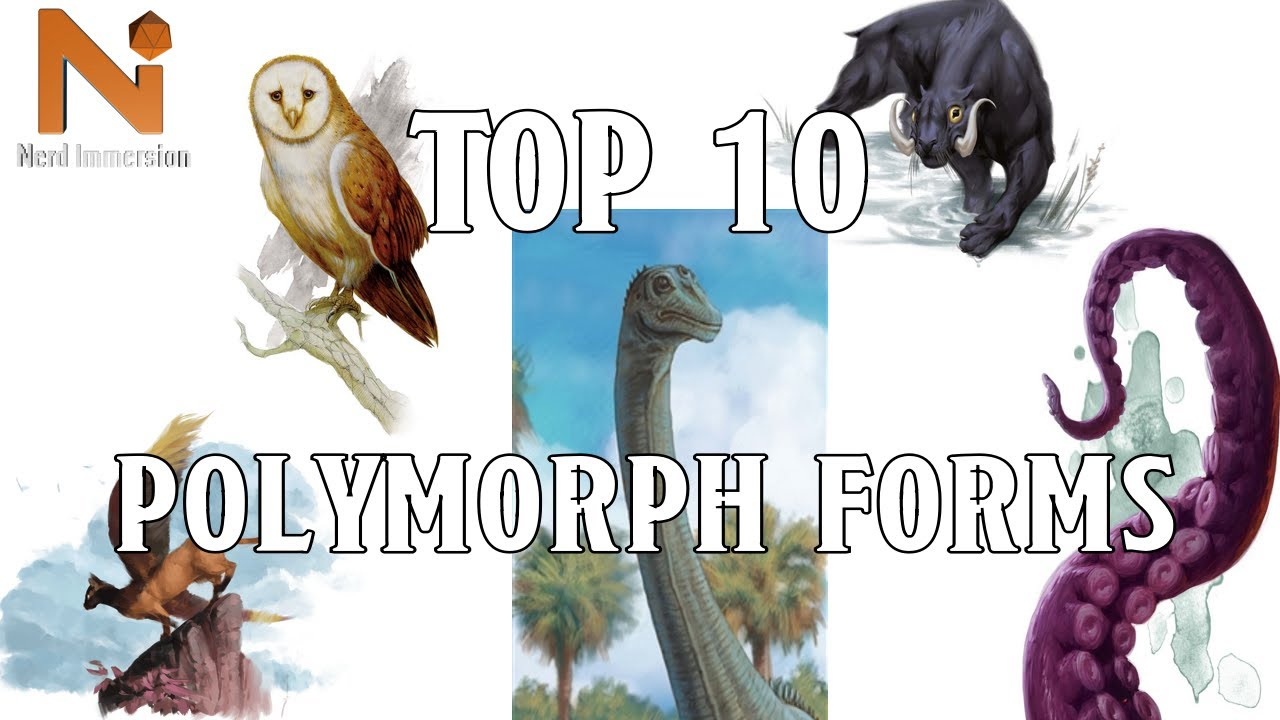 Top 10 D D 5e Polymorph Forms Nerd Immersion Youtube