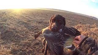 #47 Охота на гуся в Беларуси 2019. Только ЛУЧШЕЕ! Hunting goose in Belarus 2019. Only the BEST!
