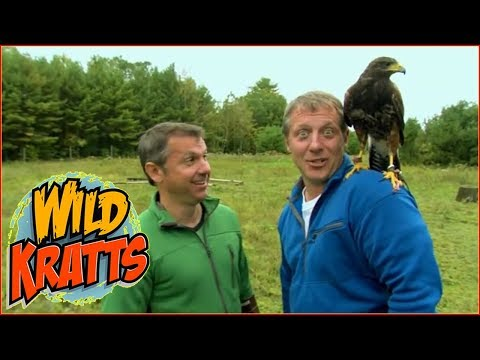 ► Wild Kratts HD - Raptor Round Up - Wild Kratts Full Episodes In English