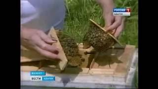 Дождливый и холодный май, как и начало лета губительно повлияли на пчеловодство Адыгеи(, 2016-06-15T07:55:06.000Z)