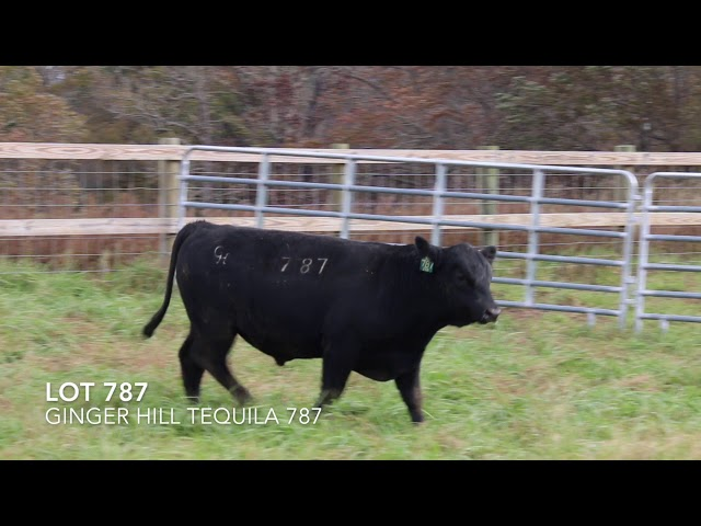 Ginger Hill Angus Lot 787