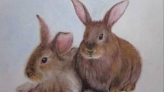 How to draw cute rabbits: Susanna Proskura
