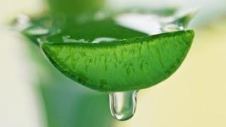 Алоэ Вера - свойства, применение, рецепты