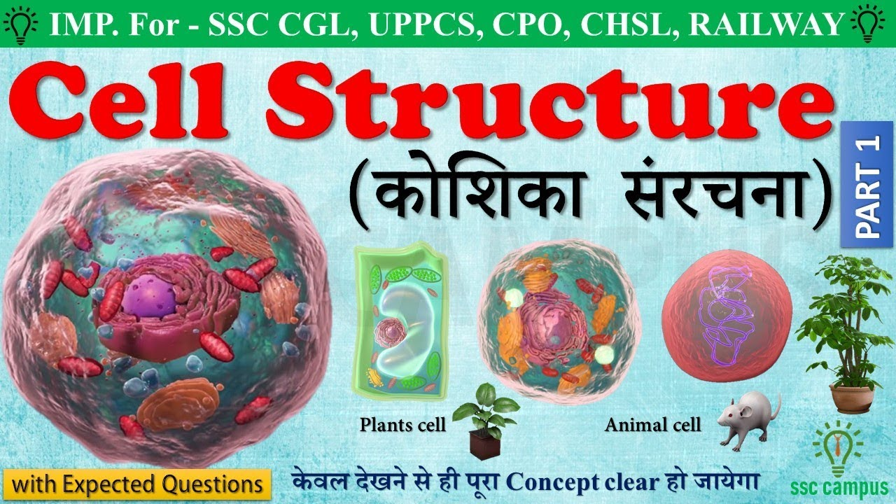 Cell structure (human cell) । कोशिका संरचना। animal cell ...