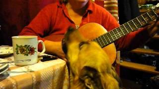 Пьяная оргия с собакой
