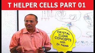 T Helper cells and B cells 1/10