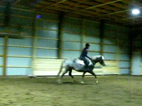 Roy- 5 year old welsh pony