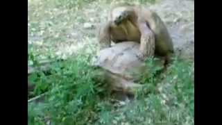 Як це секс у черепах??)