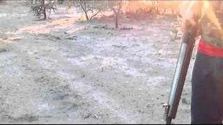Víbora cascabel hermosillo sonora