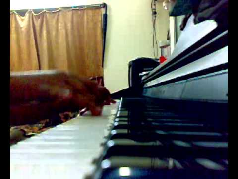 Chol rastay(Piano cover) By Swagato