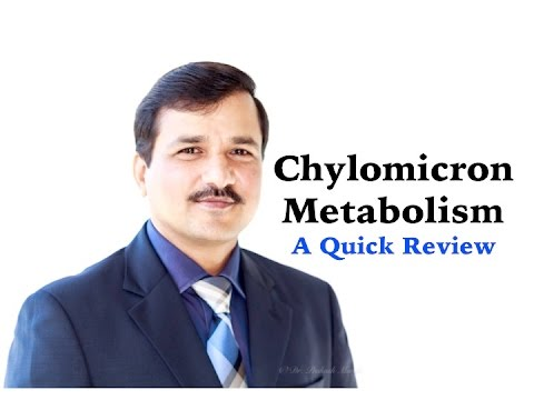 Chylomicron Metabolism - A Quick Review