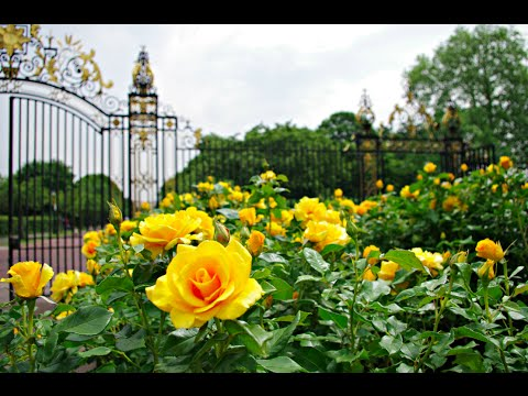 MY SUMMER WALK OF QUEEN MARY'S GARDEN REGENTS PARK LONDON INCLUDING THE ROSE GARDEN