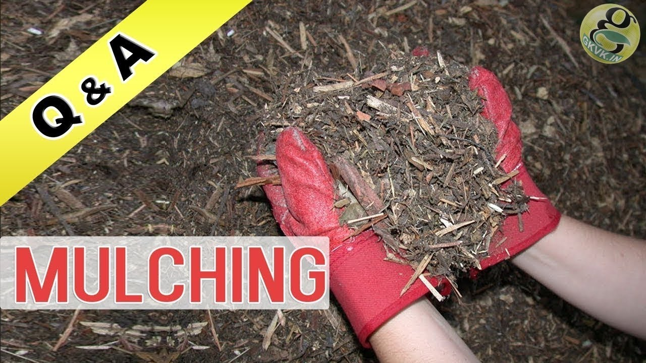 What Is Mulching In Gardening Or What Materials I Can Use And What