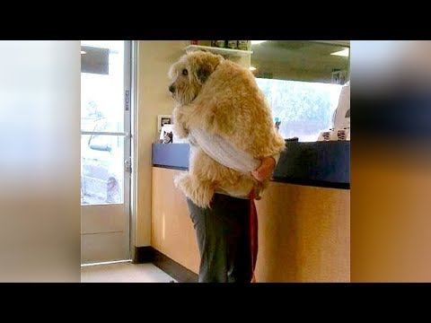 ANIMALS GO TO THE VET: Funniest REACTIONS  You'll LAUGH ALL DAY LONG