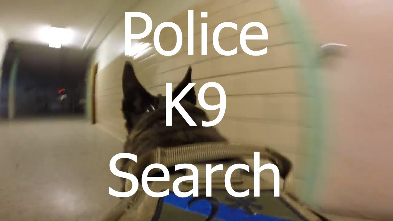 Police K9 Building Search Bodycam
