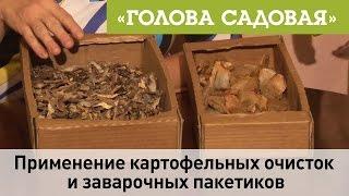 Голова садовая - Применение картофельных очисток и заварочных пакетов