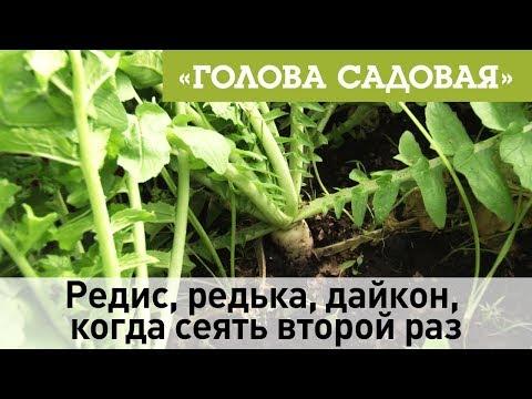 Вопрос: Можно ли садить редис несколько раз?