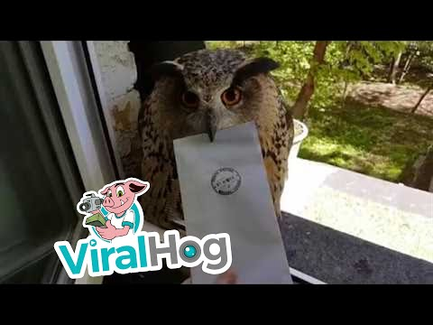Jadd - How This Owl Didn't Attack This Guy Is Mind-Boggling