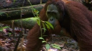 Philippe Cousteau's Expedition Sumatra, Part 2