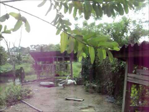 Kahang Organic Rice Eco Farm 2014