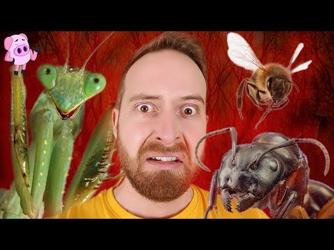 Horrific Insect Behavior That Will Make Your Skin Crawl