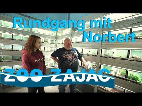 Rundgang Mit Norbert Bei Zoo Zajac
