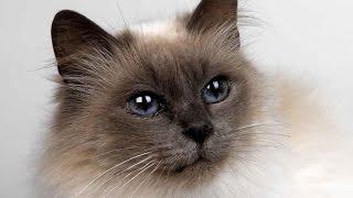 Приколы. Смотреть приколы бесплатно.Кошки очарование мое! ..