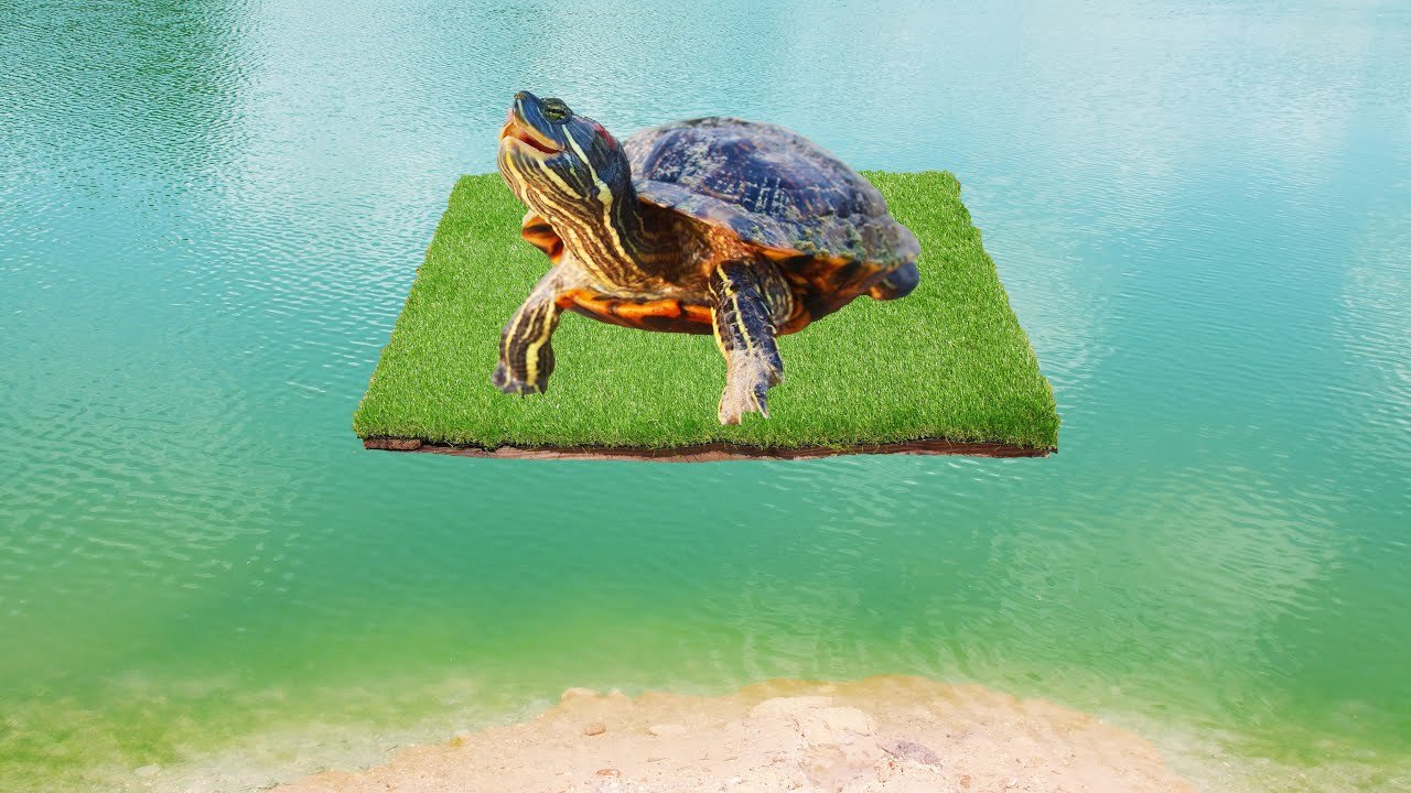 Building a Floating Island for the Turtles!