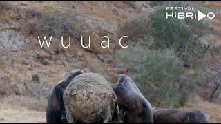 Wuuac