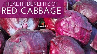 Best Health Benefits Of Red Cabbage | Interesting Facts About Red Cabbage