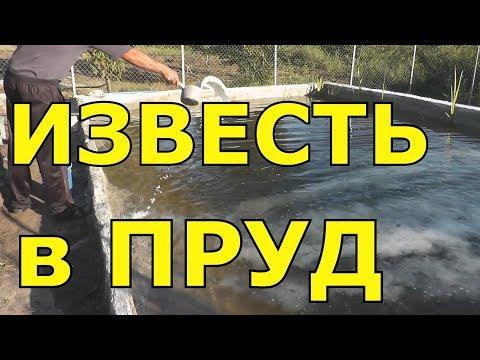 Вносим известь в пруд Чтобы вода не цвела Известкование пруда Как очистить воду ПавелВоеводский