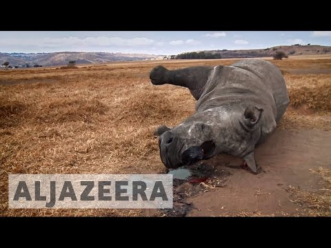 Exclusive: South African minister linked to rhino poaching