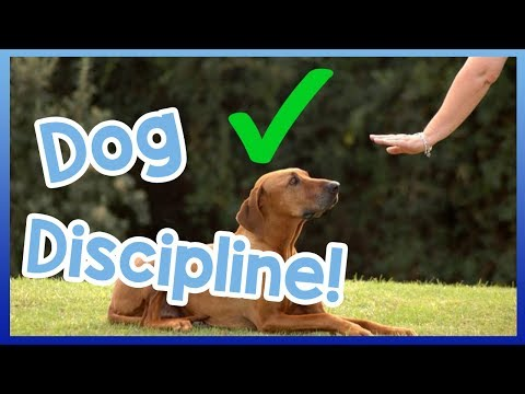 how-to-correctly-tell-a-dog-off!-dog-discipline-vs.-punishment!