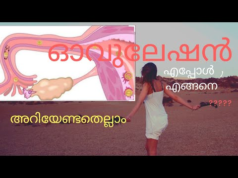 Ovulation and pregnancy, ovulation in malayalam, what is ovulation, when does ovulation occurs