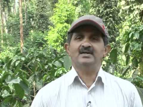 AUGMENTING BLACK PEPPER PRODUCTION-A SUCCESS STORY FROM KODAGU - English.flv
