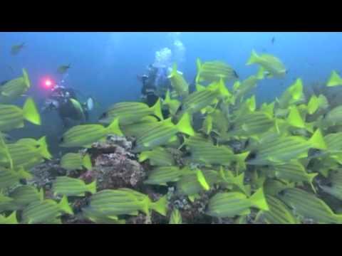 Maldives trip 2011 with club 54