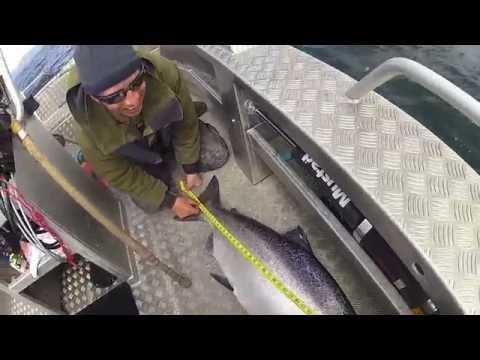 50 Pound Spring Salmon In Haida Gwaii!