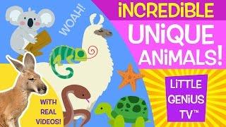 Unique Animals! | videos for babies, toddlers, kids | Little Genius TV™
