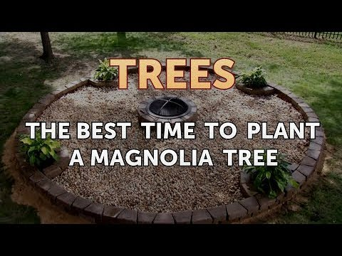 The Best Time To Plant A Magnolia Tree Youtube