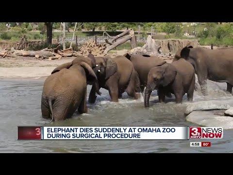 Henry Doorly Zoo elephant death