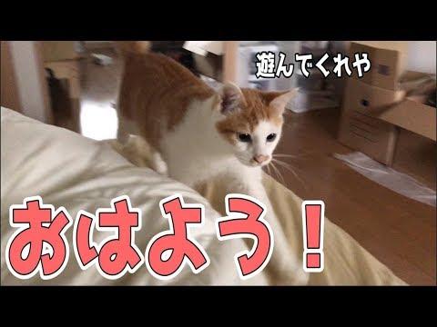 【喋った?!】おはようの挨拶をしに来る猫たち!そのまま朝ごはんもあげちゃいます