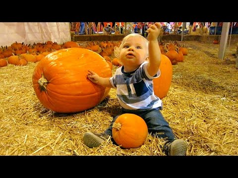 PUMPKIN PATCH BULLY! (10.4.14 - Day 617)