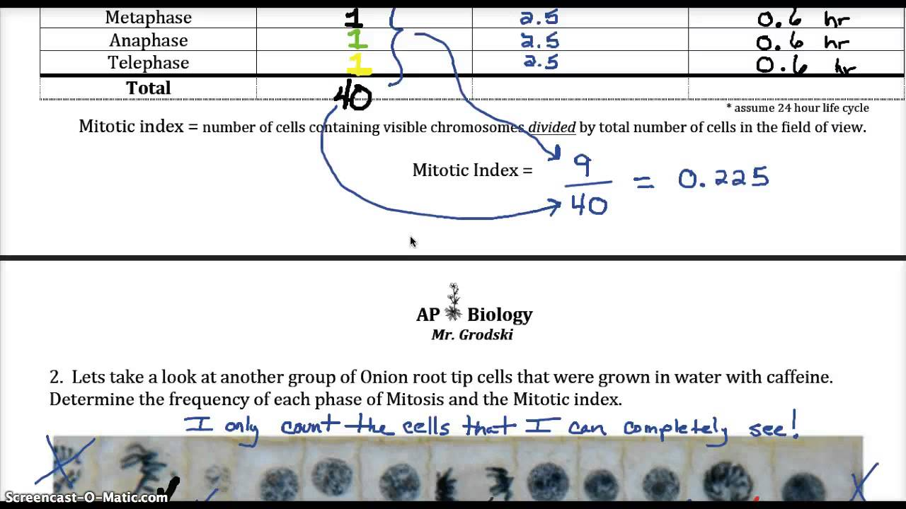 Mitosis Cell cycle worksheet review YouTube – Mitosis Coloring Worksheet
