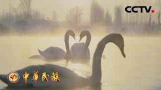 《中华民族》 20201222 伊犁河 第三集 山河动力| CCTV - YouTube